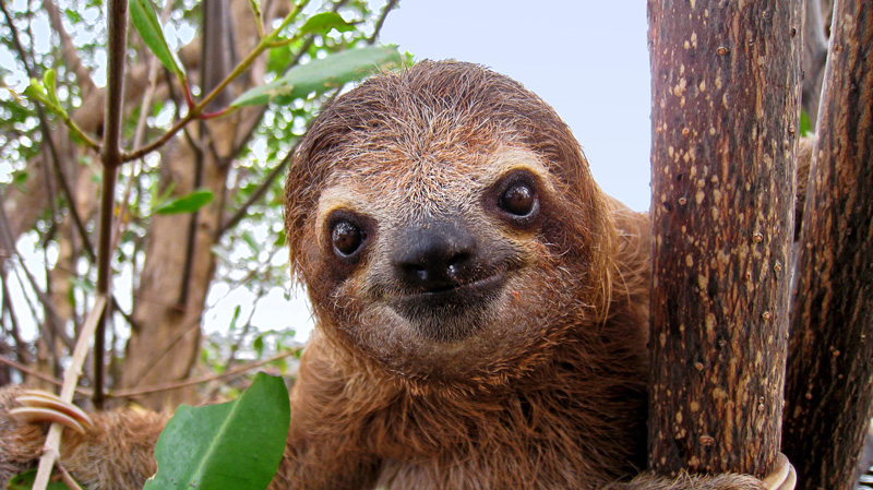sloth4_full[1]